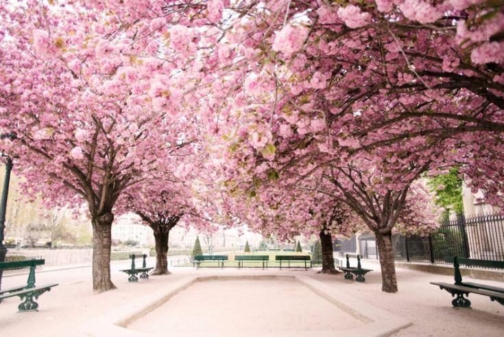 spring photos of Paris France