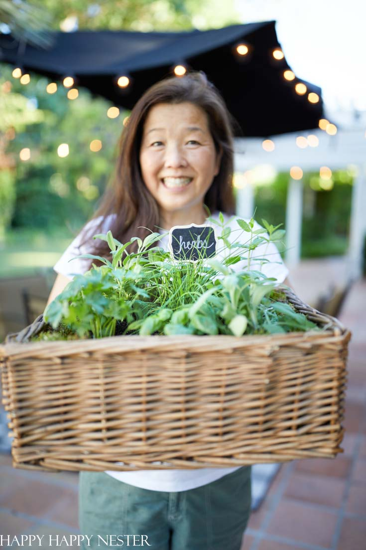 How to plant an herb garden in a basket