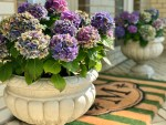 Styling the Front Entrance with French Urns and an Elegant Outdoor Mat