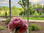 When to Plant, Cut and Store Your Peony Flowers for Later Use