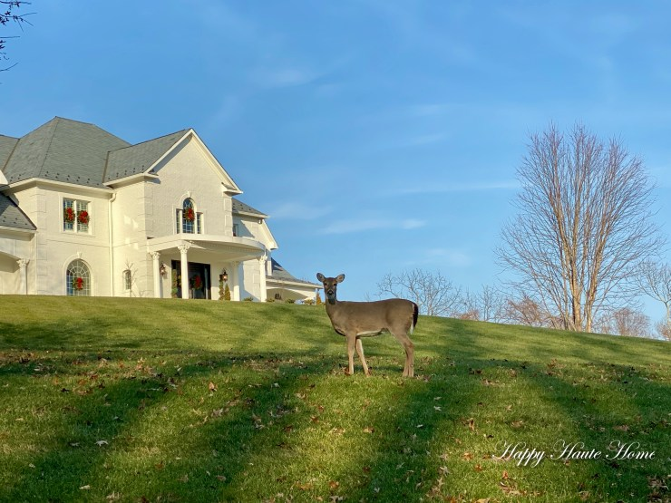 Reindeer on lawn-1