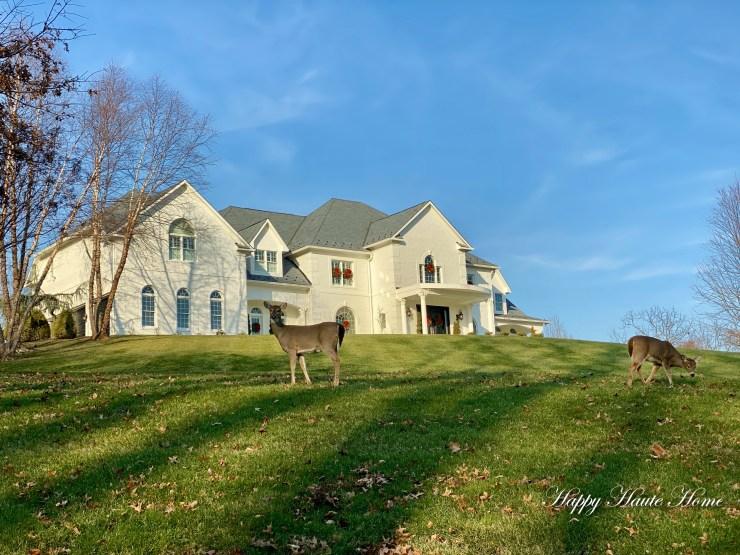 Reindeer on lawn-3