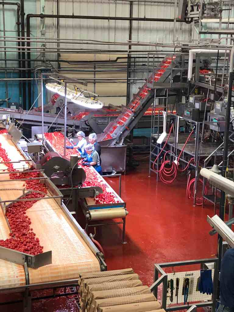 Are Canned Foods Nutritious? inside the Red Gold tomato processing plant