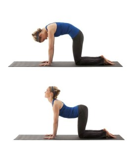 Cat Pose Stretch for Lower Back