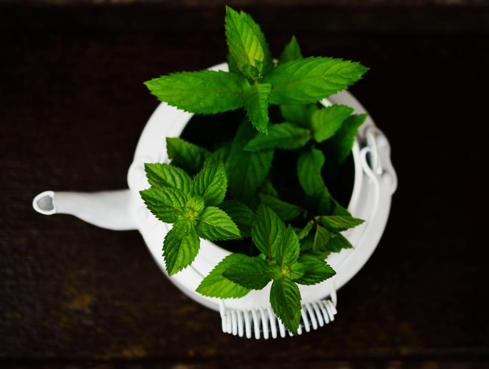 Peppermint to Help the Digestive Tract