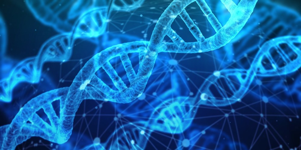 Strands of DNA Genetics can Cause Belly Fat