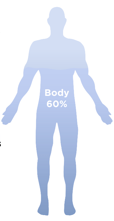 Human Body Made Up Of 60% Water