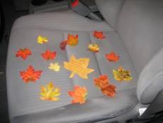 """""""It's Fall in my car!"""""""