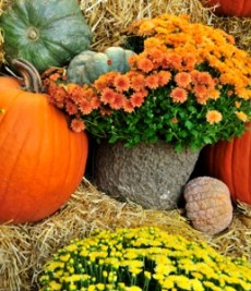 Fall Hostess Gift Ideas