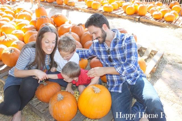 pumpkin patch 11