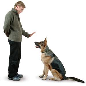 Dog Training  Happy Hound Dog Resorts