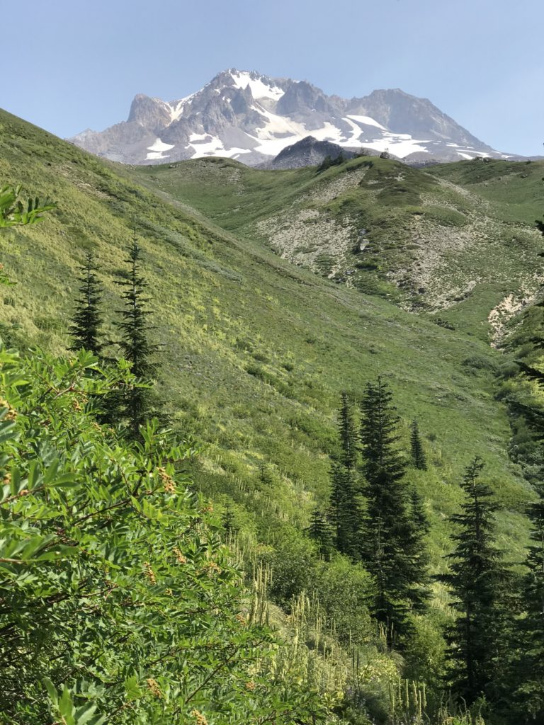 View of Mt. Hood from trail