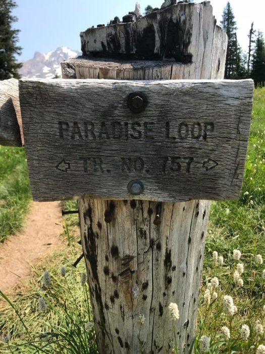 Paradise Loop