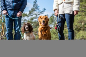Hundhalsband och Hundkoppel