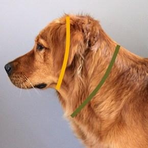 Mätt halsmåttet på en hund