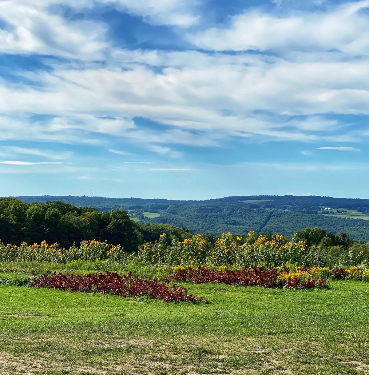 View from South Hill Cider #southhillcider #ithacany #whattodoinithacany #hardciderithacany #hardciderfingerlakesny #fingerlakesny #fingerlakesvacation #ithacaweekend