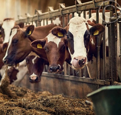 Grass-fed Beef & Raw Milk