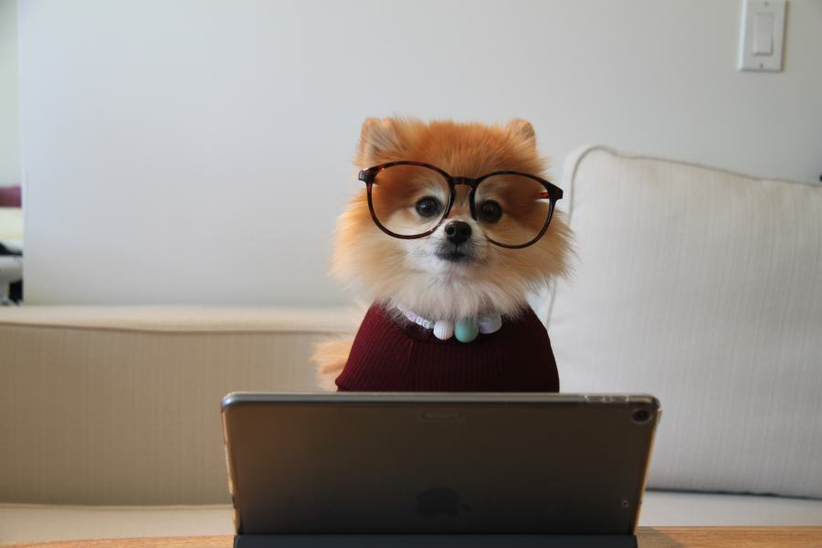Photo of a dog wearing glasses, a necklace, and a red sweater sitting behind an open laptop