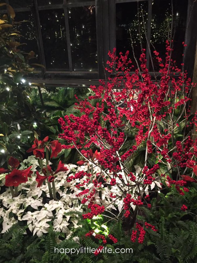 Berries and Poinsettias
