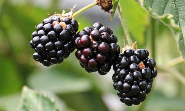Ostružiny mají zázračné účinky! Proč je jíst?