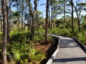 Free Things to Do in Naples Florida - Naples Preserve