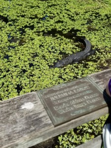 Corkscrew Swamp Sanctuary a fun Thing to Do in Naples florida with kids