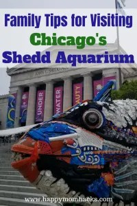 Tips for a Day at the Chicago Shedd Aquarium with Kids. Things to do, where to eat, park, and free days. Families will love visiting Dolphins, Beluga Whales, Penguins and fish. #sheddaquarium, #chicagoattractions, #traveltips,