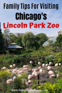 Lincoln Park Zoo a Chicago Attraction you can't miss. Find out the best things to do in this free Illinois Zoo. Get tip on your family visit, Zoo lights and more. #lincolnparkzoo #zoo #chicagoattraction #familytavel #familyvacation