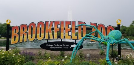 Brookfield Zoo Chicago with Kids, all the Things to do and see while visiting with family. Where to park, eat and visiting tips. #brookfieldzoo, #chicagoattracations, #traveltips,, #familytravel