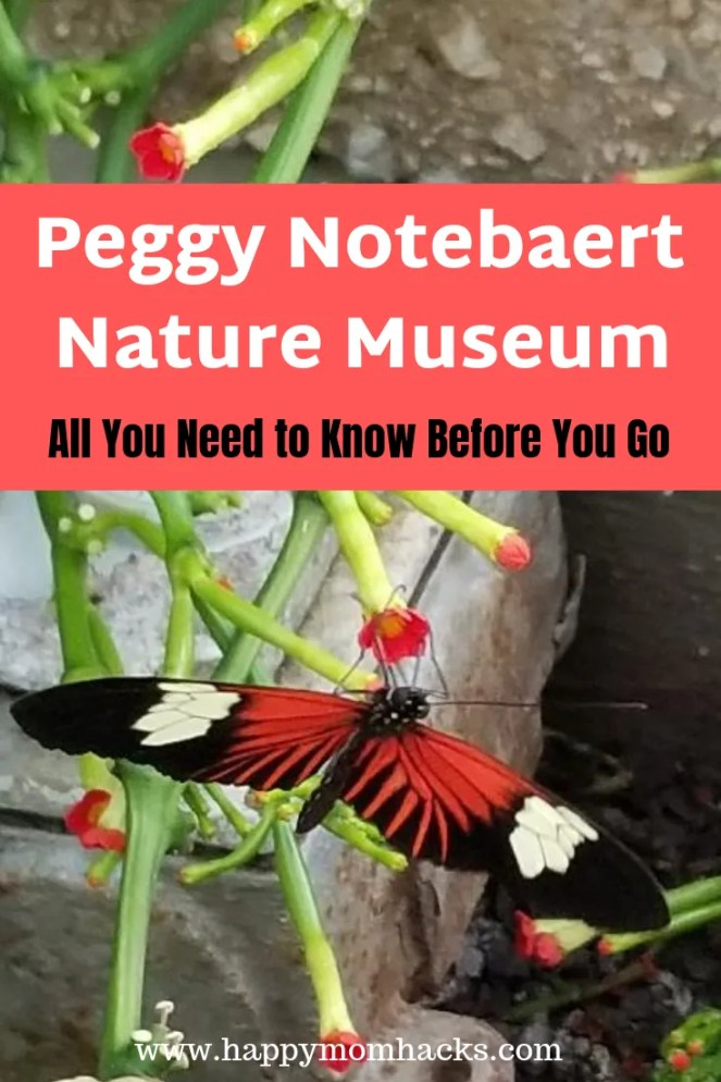 Peggy Notebaert Nature Museum Chicago. Visit beautiful butterflies, reptiles, nature trails your kids will love. Be prepared for your visiting to this amazing nature museum in chicago with these tips. #notebaert, #nature, #familytravel, #chicago