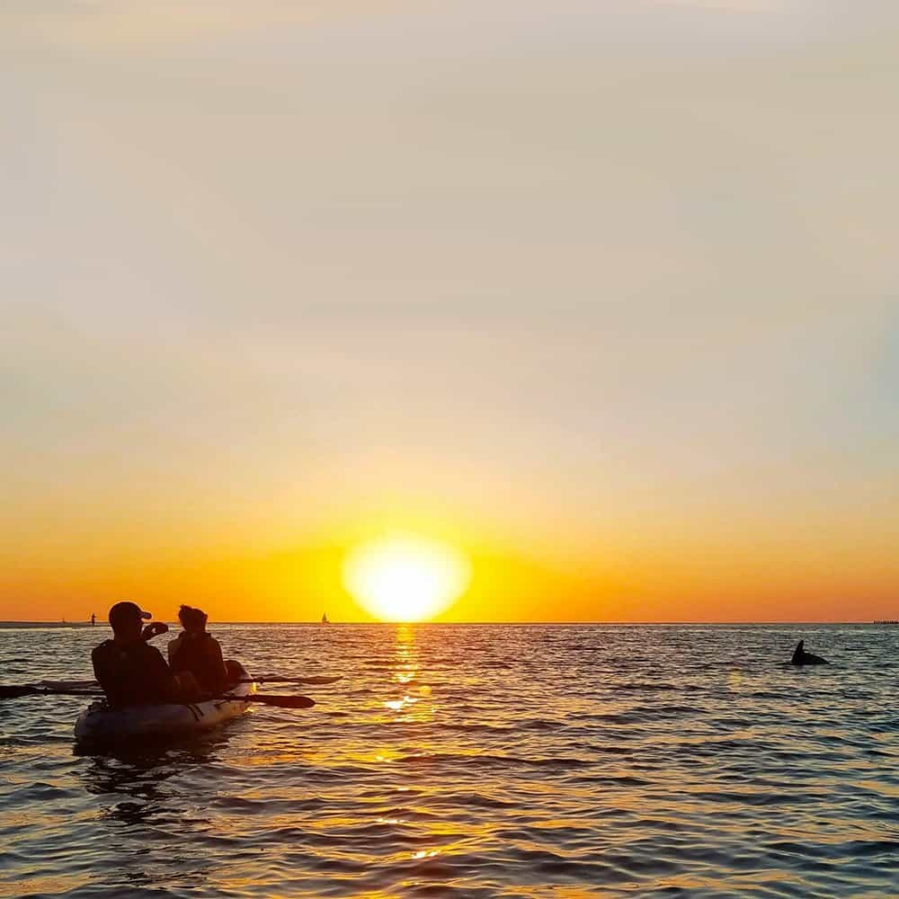 Kayakers sunset with dolphin near Anna Maria Island