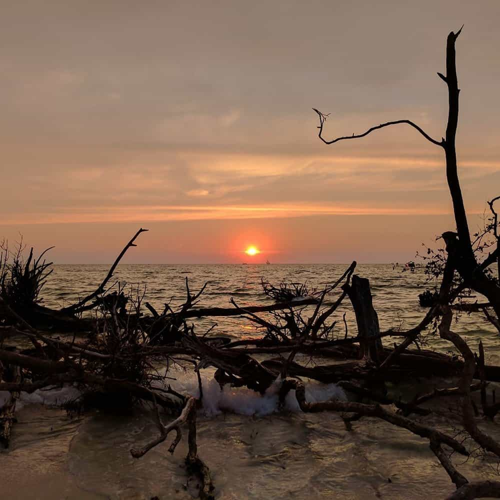 sunset-driftwood-whitney-beach-longboat-key