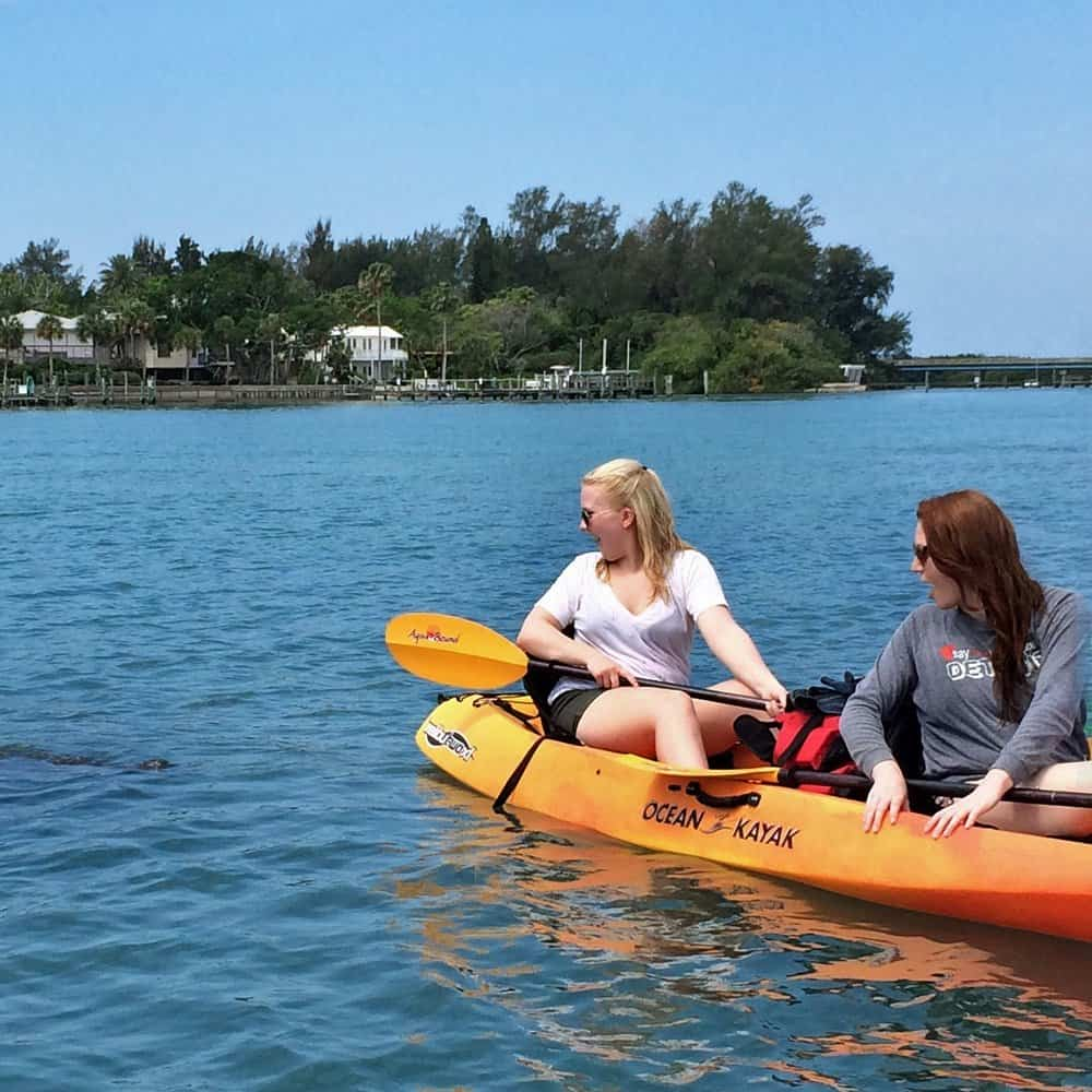 Manatee approaching paddlers on the Coastal Island Tour at Longboat Pass, Florida