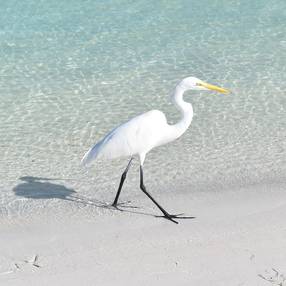 Bird at the beach with clear water
