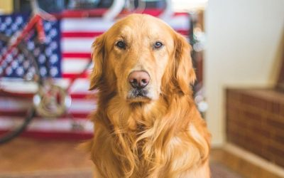 Best Practice for Dog Owners This 4th of July