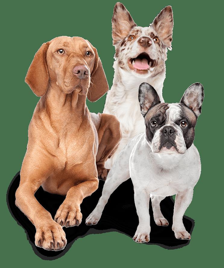 Grooming Dogs Cincy