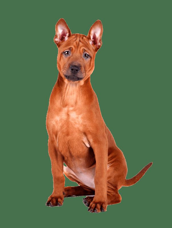 Doggie Day Care Delhi