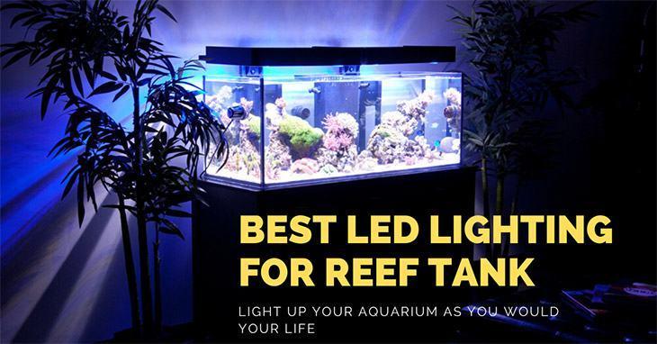 best led lighting for reef tank for