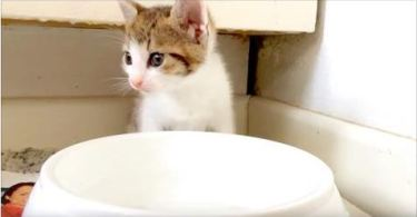 Teeny Tiny Kitten Drinks Water For The First Time (AND OH MY GOD!)