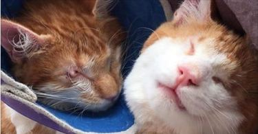 These Two Blind Kitten Twins Love Each Other