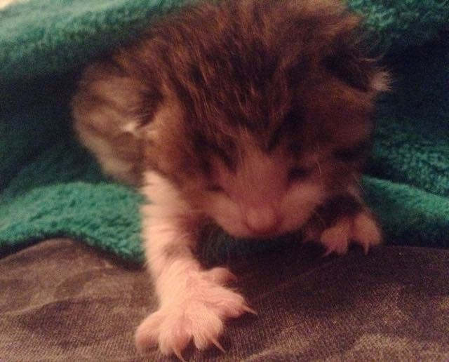Newborn Kitten Found in the Cold and Rain Turned Around by Love