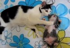 Cat Mom Noticed her Sweet Baby Kitten Has a Really Bad Dreams, So She Solved The Problem