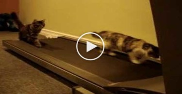 Funny Cats Experience Treadmill For the First Time