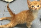 Paralyzed Kitten Walking for the First Time. Heart Melting Story...