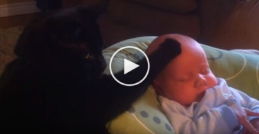 Kind Black Cat Soothing Baby to Sleep. Cuteness Overloaded.