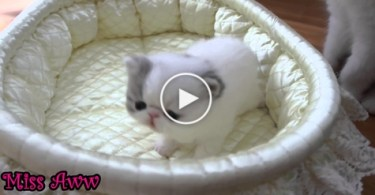 Sweet Tiny Kitty SNEEZES. So HILARIOUS. LOL