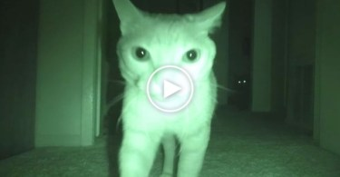 Everyone Was Sleeping At Night, When These Cats Did Something STRANGE.
