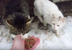 This Man Gave A Treat To a Stray Cat And The Kitty`s Reaction Melted His Heart