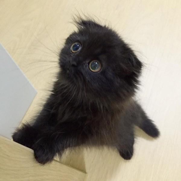 black-kitty-2