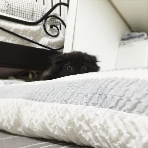 black-kitty-3